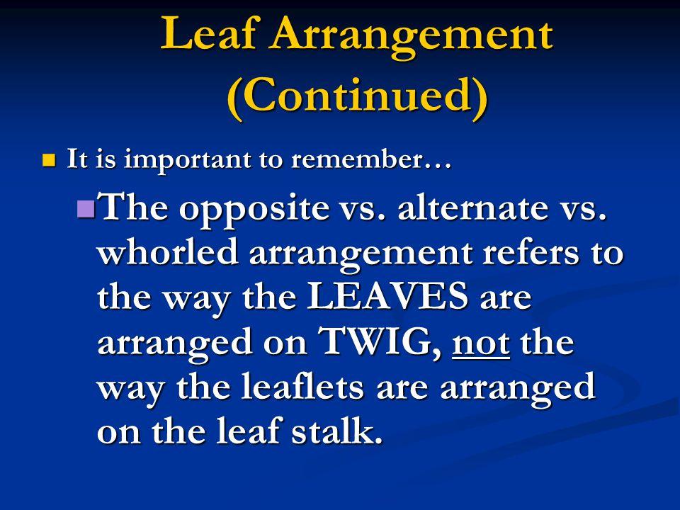 Leaf Arrangement (Continued)