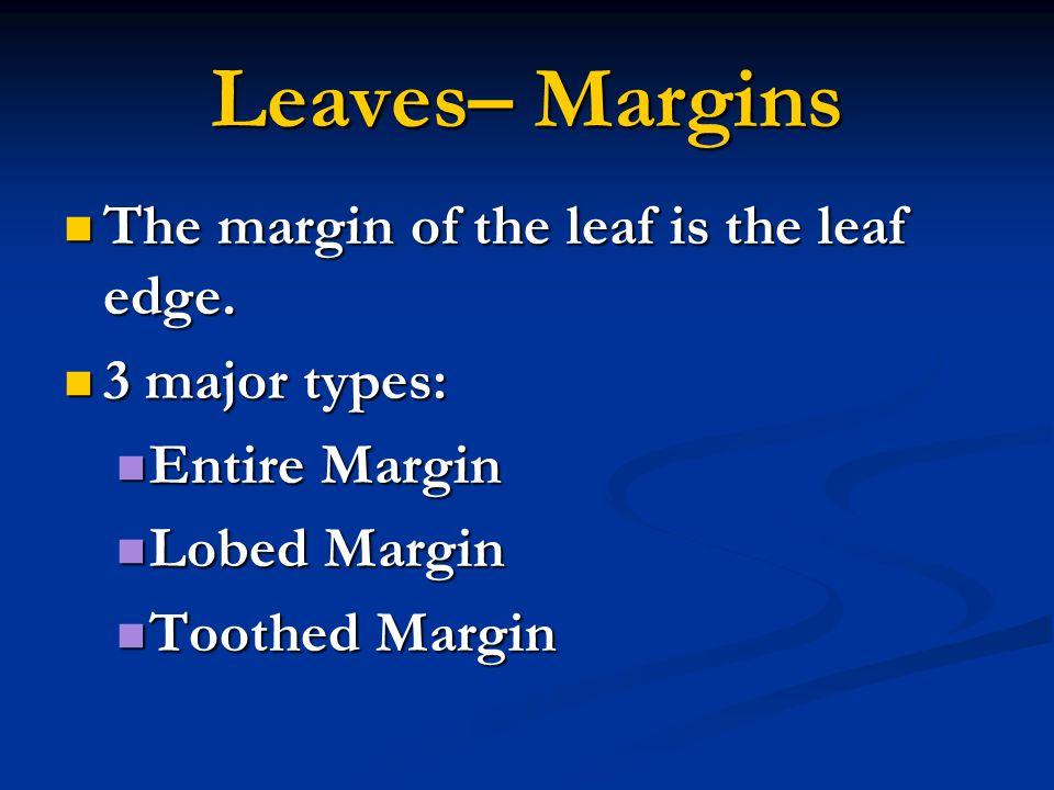 Leaves– Margins The margin of the leaf is the leaf edge.