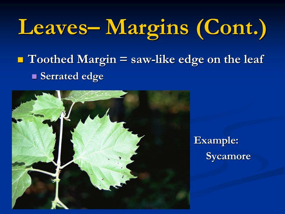 Leaves– Margins (Cont.)
