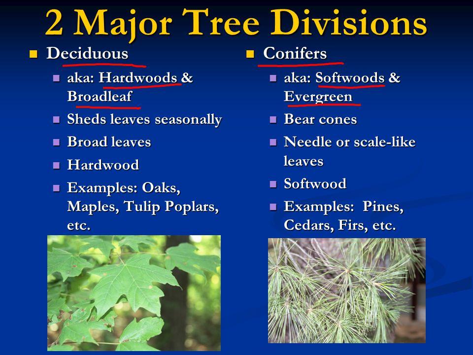 2 Major Tree Divisions Deciduous Conifers aka: Hardwoods & Broadleaf