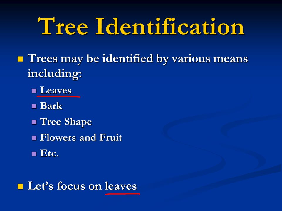 Tree Identification Trees may be identified by various means including: Leaves. Bark. Tree Shape.