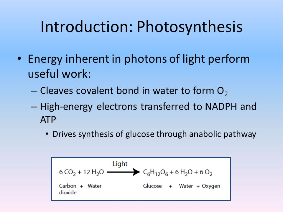 Introduction: Photosynthesis