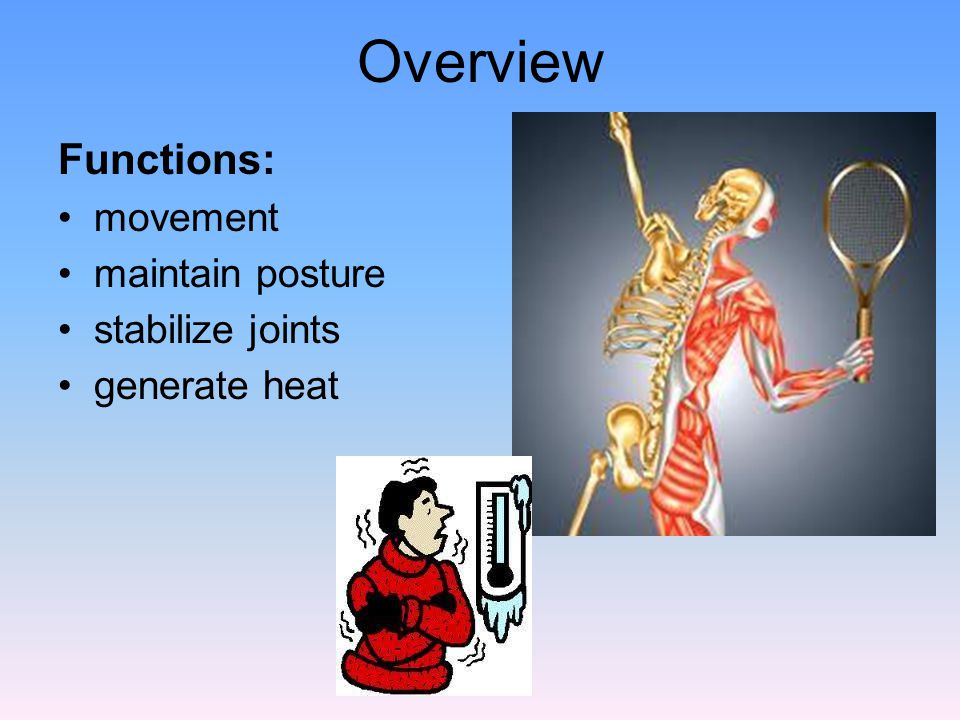 Overview Functions: movement maintain posture stabilize joints