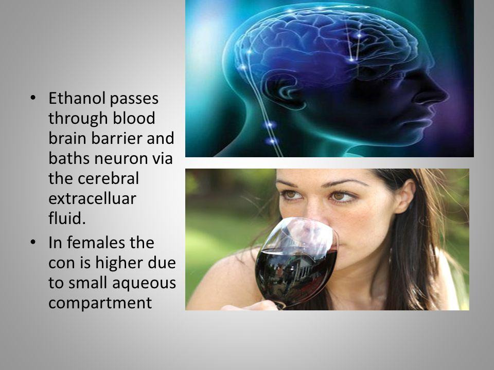 Ethanol passes through blood brain barrier and baths neuron via the cerebral extracelluar fluid.