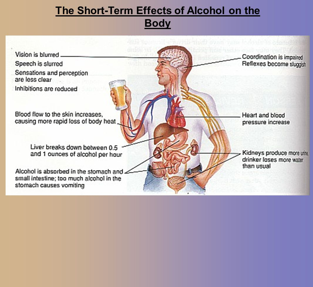The Short-Term Effects of Alcohol on the Body