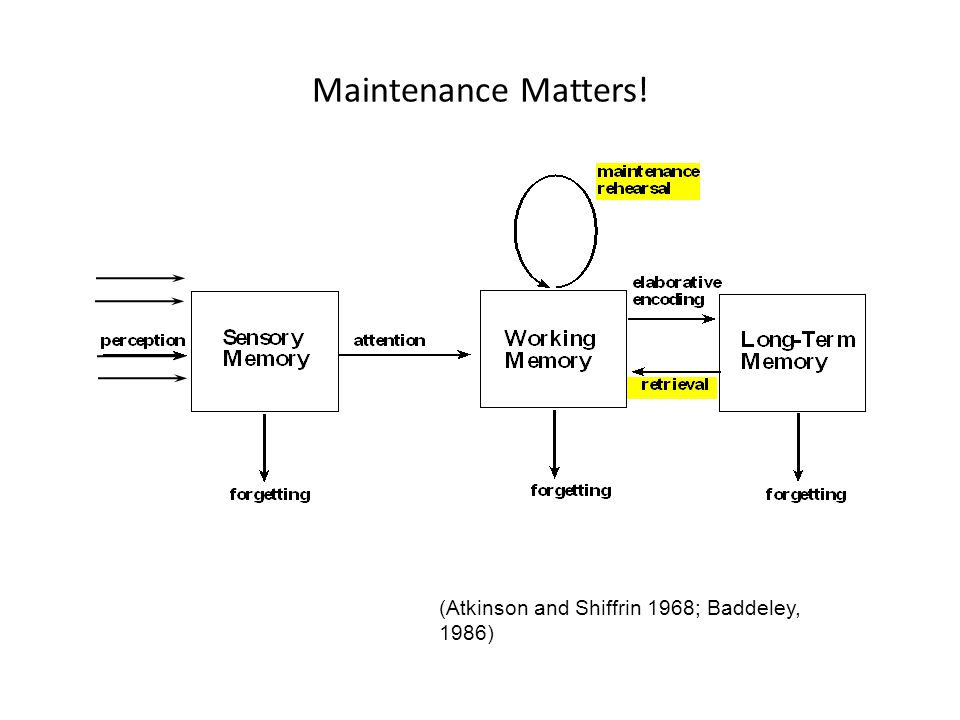 Maintenance Matters! (Atkinson and Shiffrin 1968; Baddeley, 1986)
