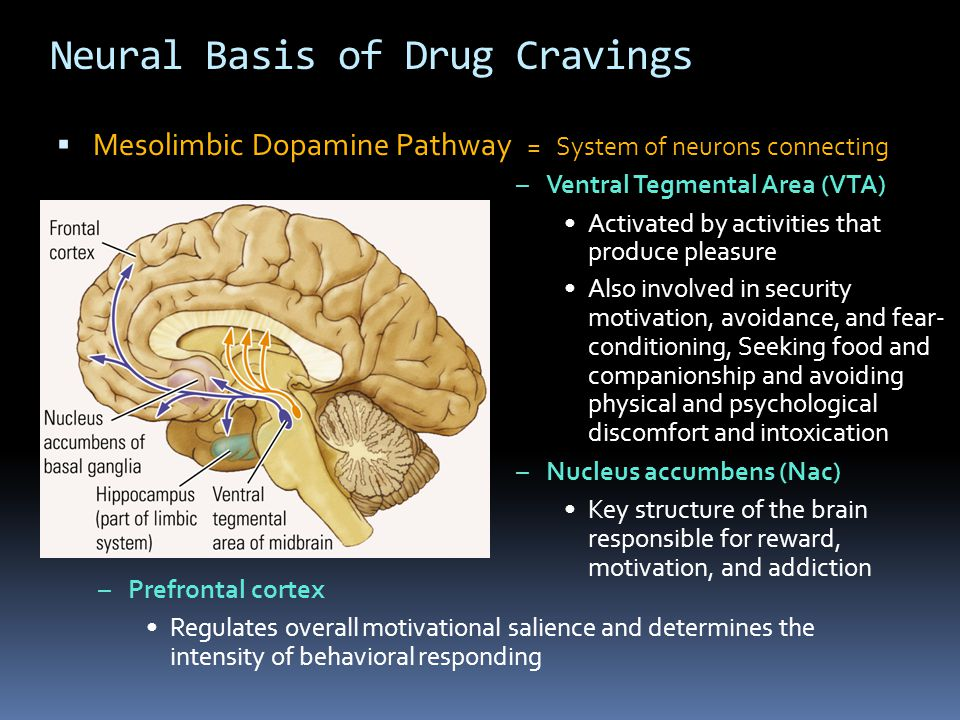 Neural Basis of Drug Cravings