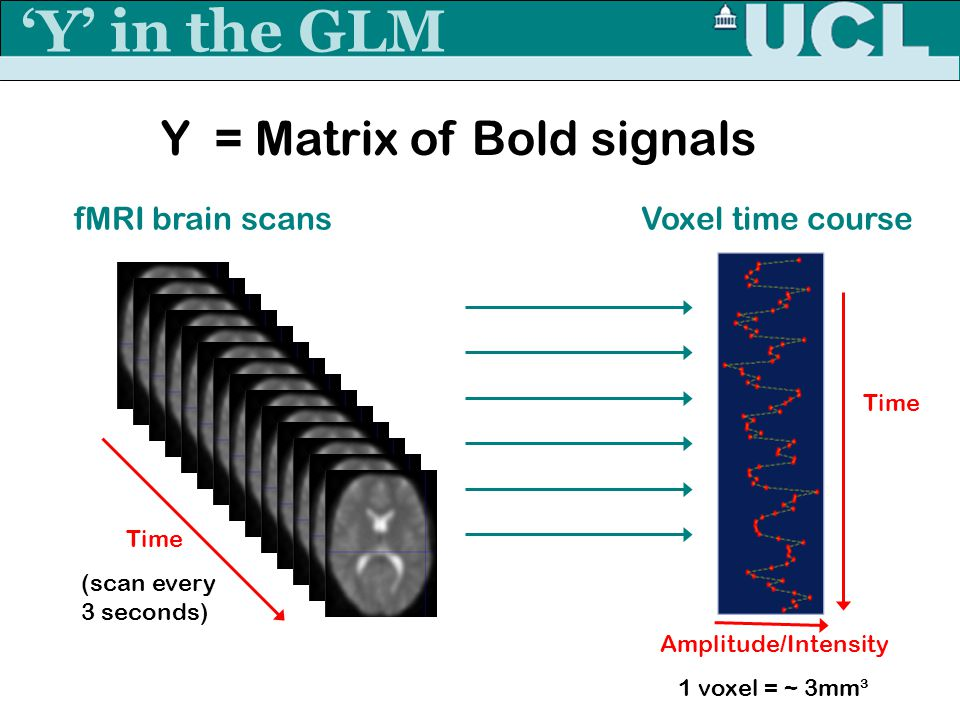 'Y' in the GLM Y = Matrix of Bold signals fMRI brain scans