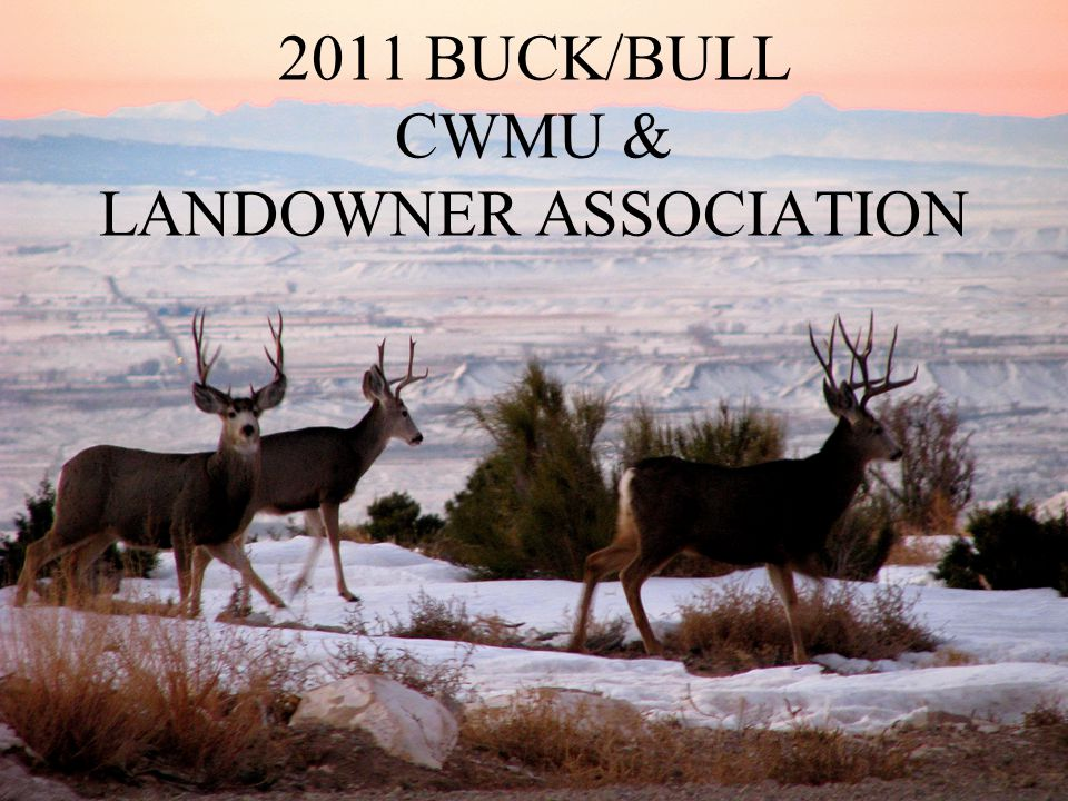 2011 BUCK/BULL CWMU & LANDOWNER ASSOCIATION