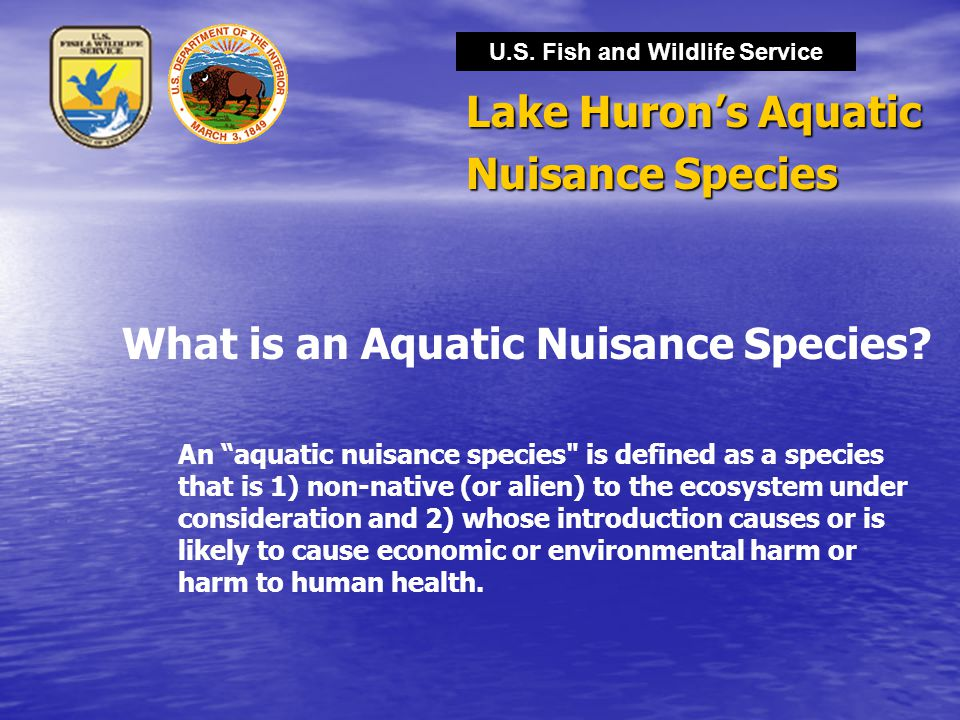 Lake Huron's Aquatic Nuisance Species