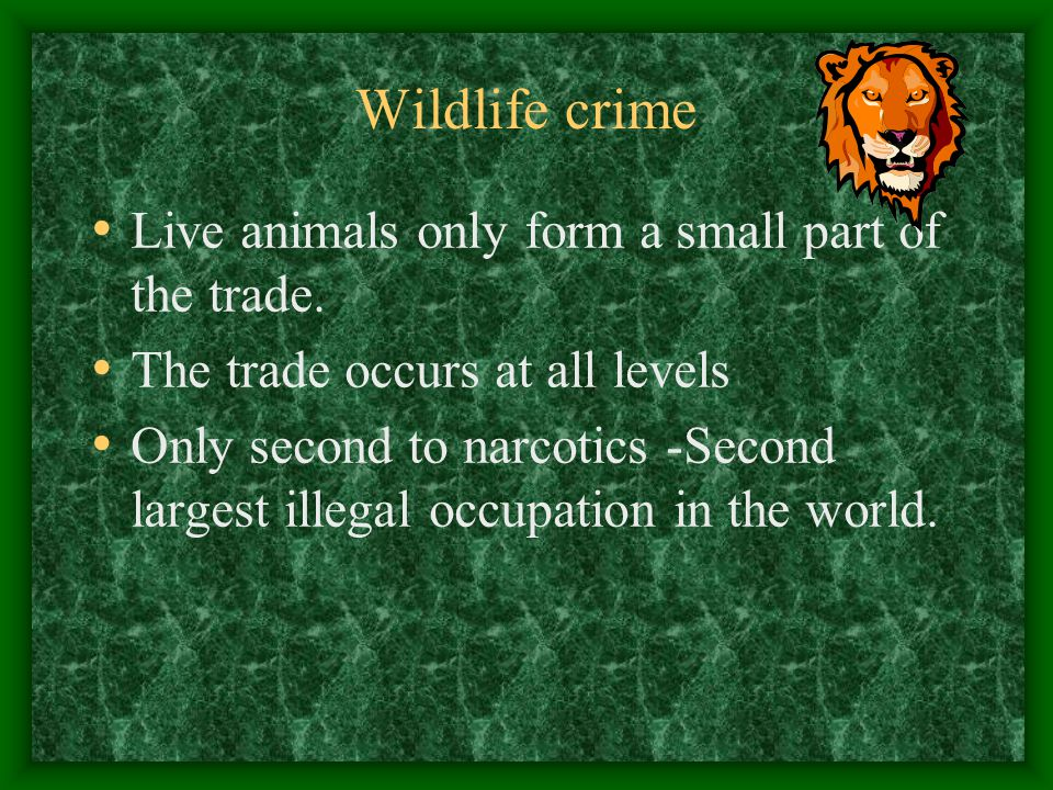 Wildlife crime Live animals only form a small part of the trade.