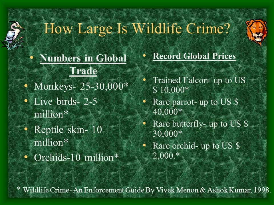 How Large Is Wildlife Crime