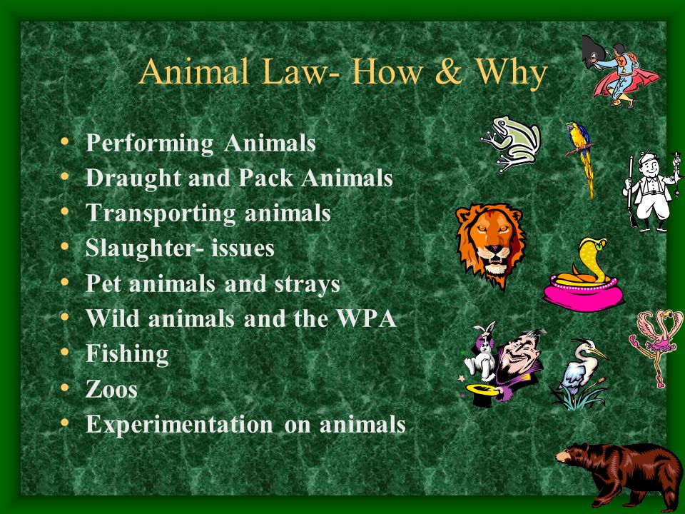 Animal Law- How & Why Performing Animals Draught and Pack Animals