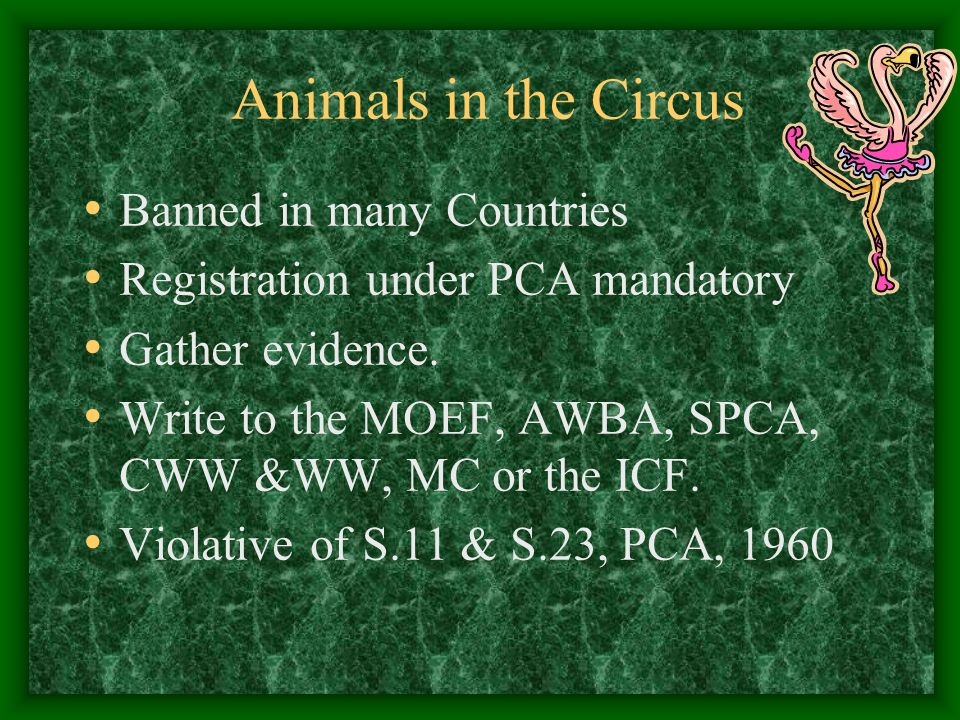 Animals in the Circus Banned in many Countries