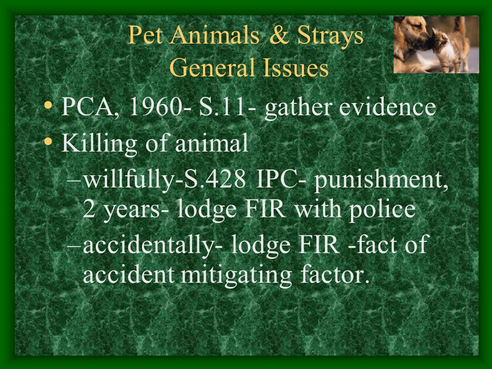 Pet Animals & Strays General Issues