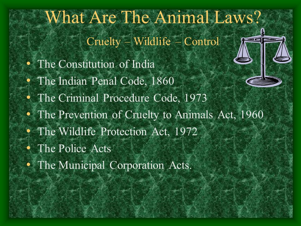 What Are The Animal Laws Cruelty – Wildlife – Control