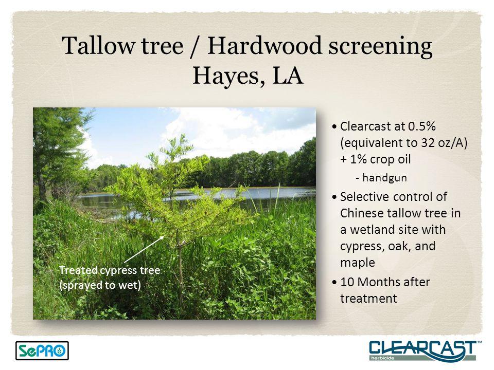 Tallow tree / Hardwood screening Hayes, LA