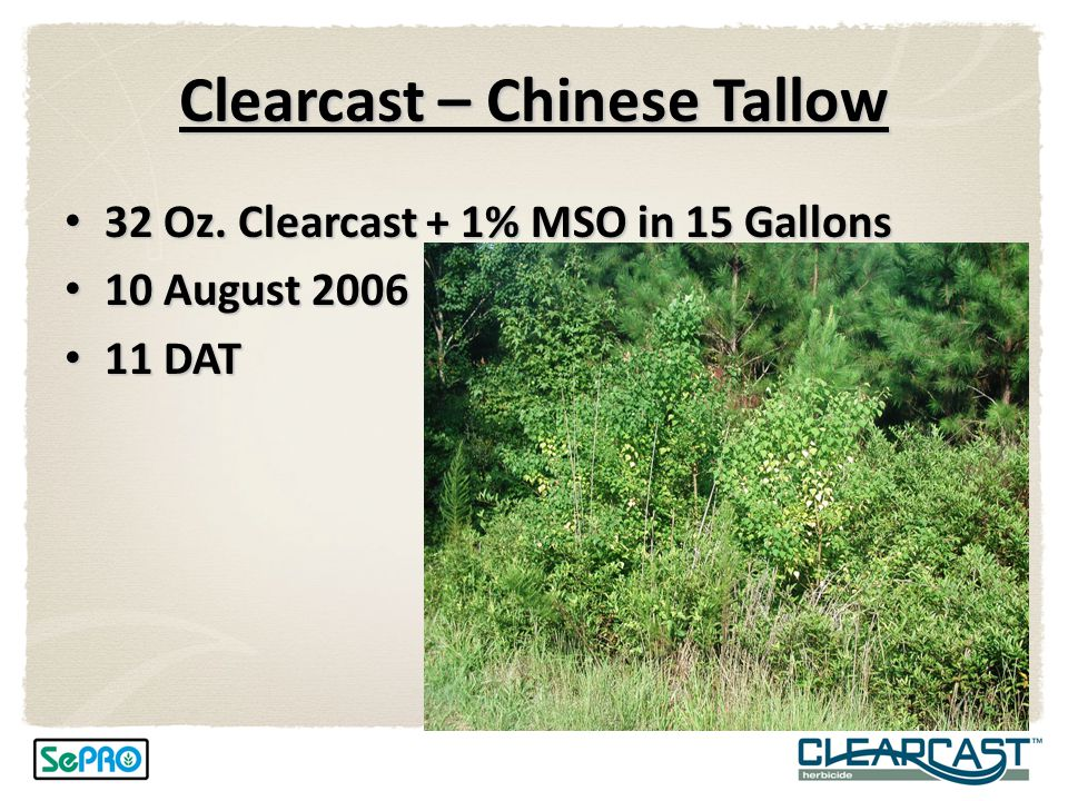 Clearcast – Chinese Tallow