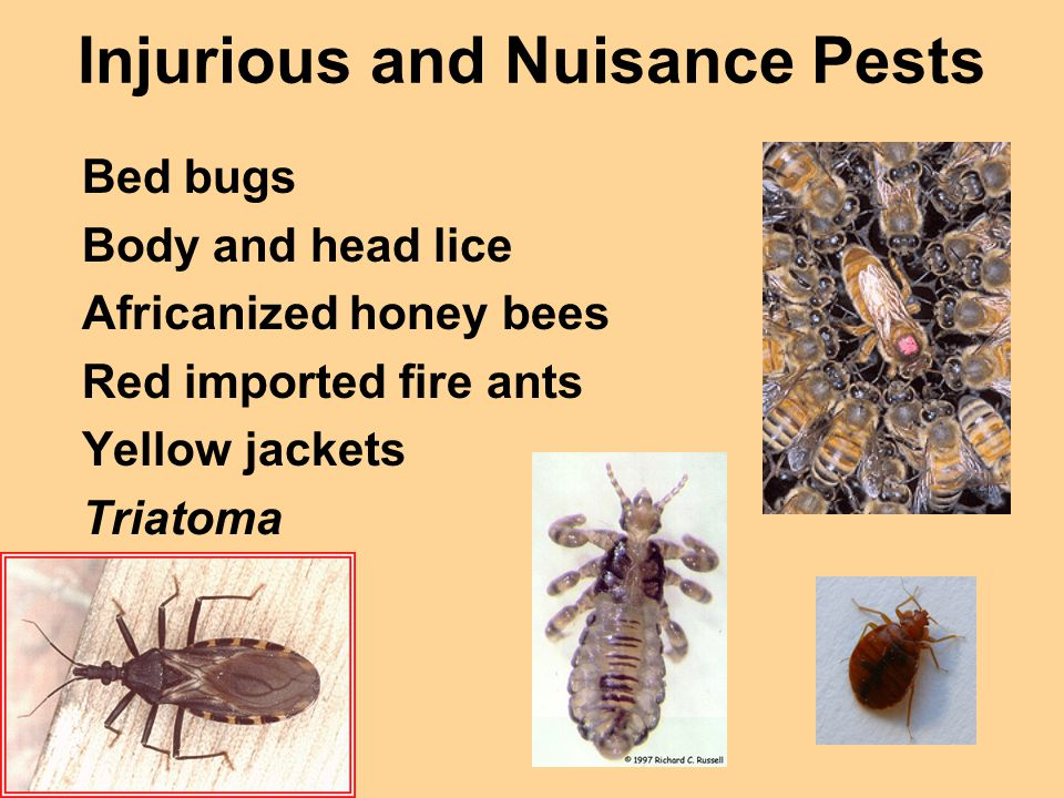 Injurious and Nuisance Pests