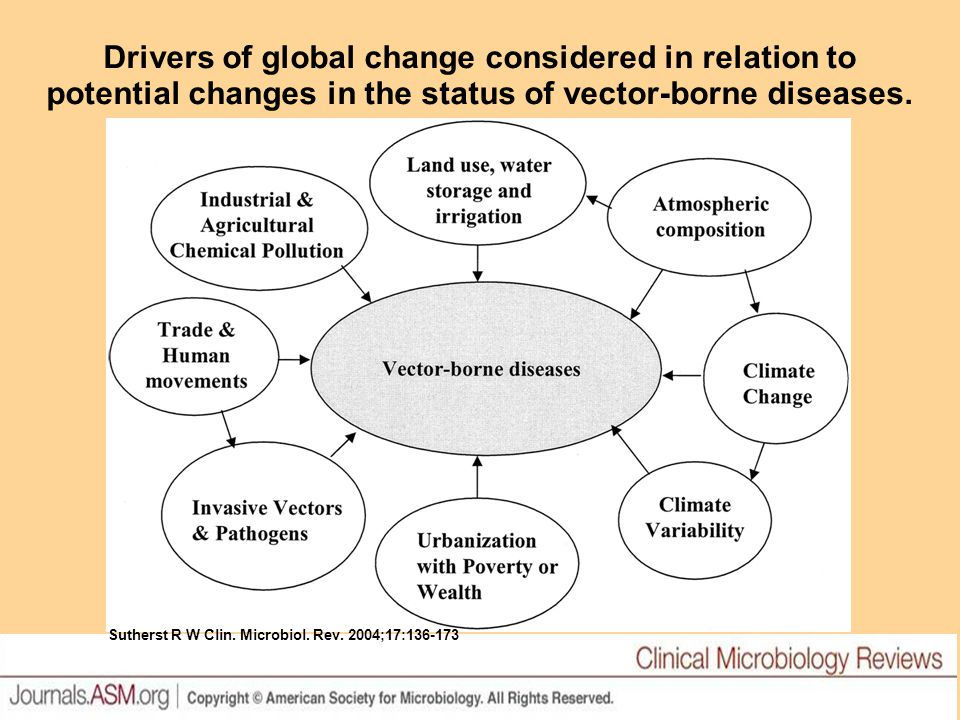 Drivers of global change considered in relation to potential changes in the status of vector-borne diseases.