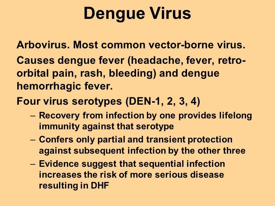 Dengue Virus Arbovirus. Most common vector-borne virus.