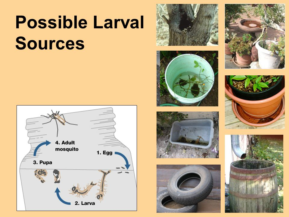 Possible Larval Sources