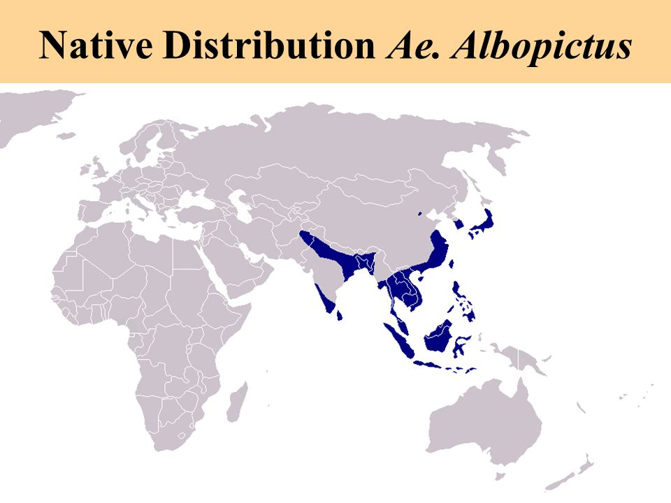 Native Distribution Ae. Albopictus