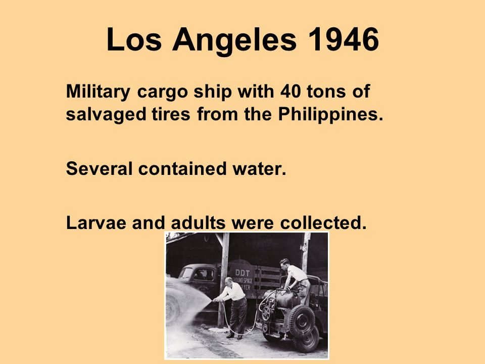 Los Angeles 1946 Military cargo ship with 40 tons of salvaged tires from the Philippines. Several contained water.