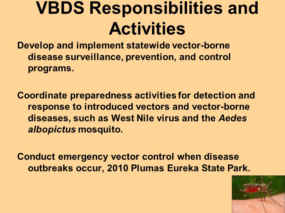 VBDS Responsibilities and Activities