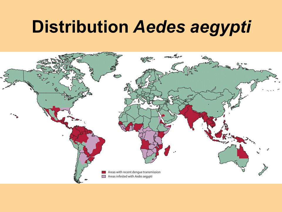 Distribution Aedes aegypti