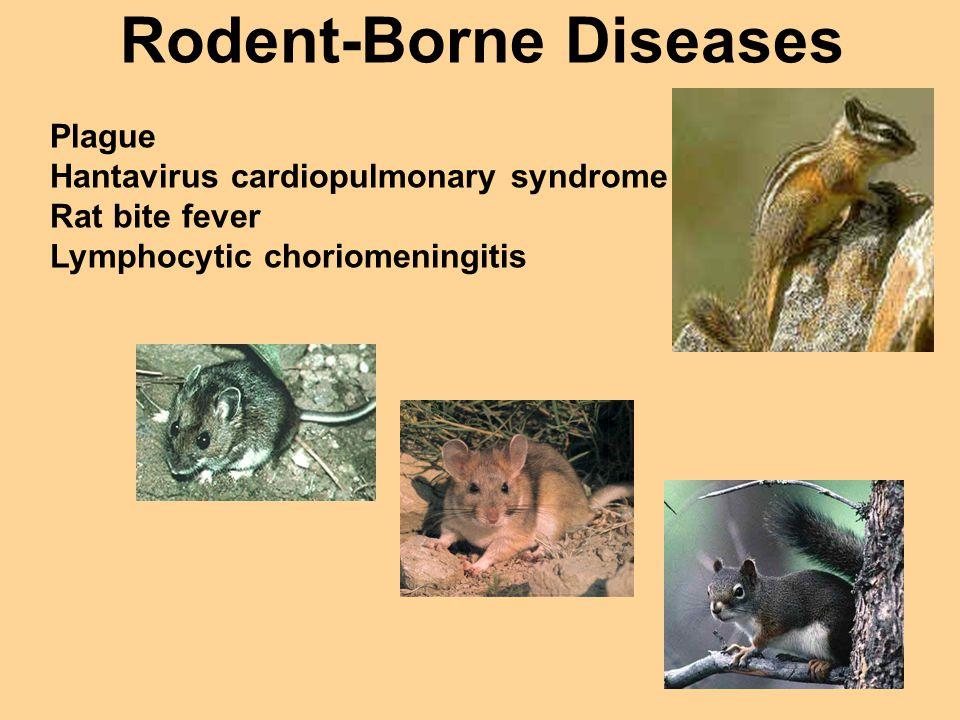 Rodent-Borne Diseases