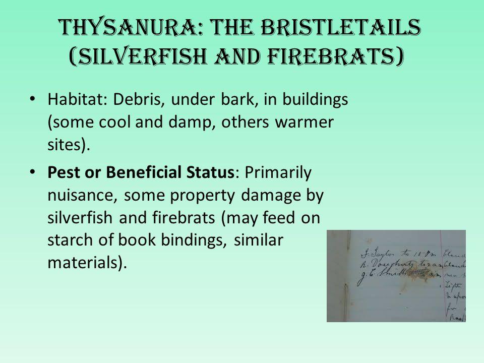 Thysanura: The bristletails (silverfish and firebrats)