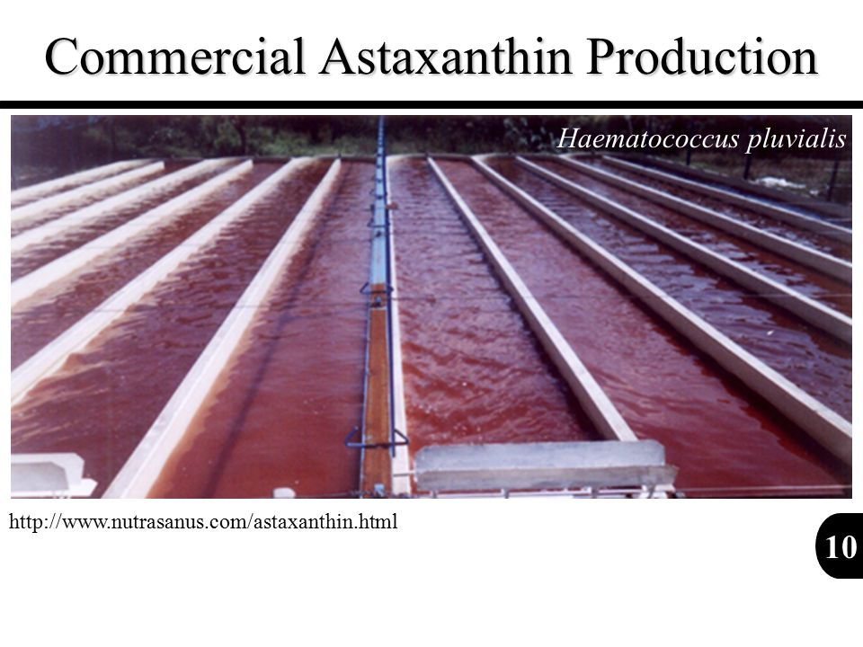 Commercial Astaxanthin Production