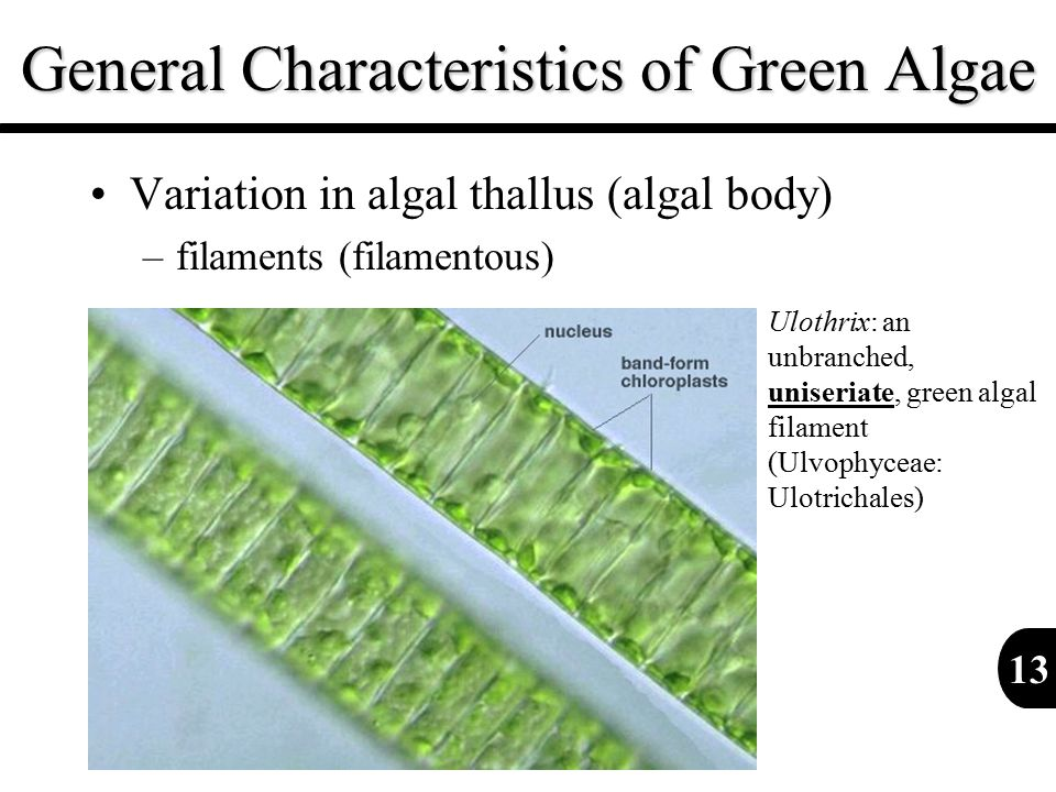 General Characteristics of Green Algae