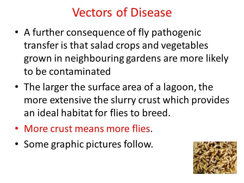 Vectors of Disease
