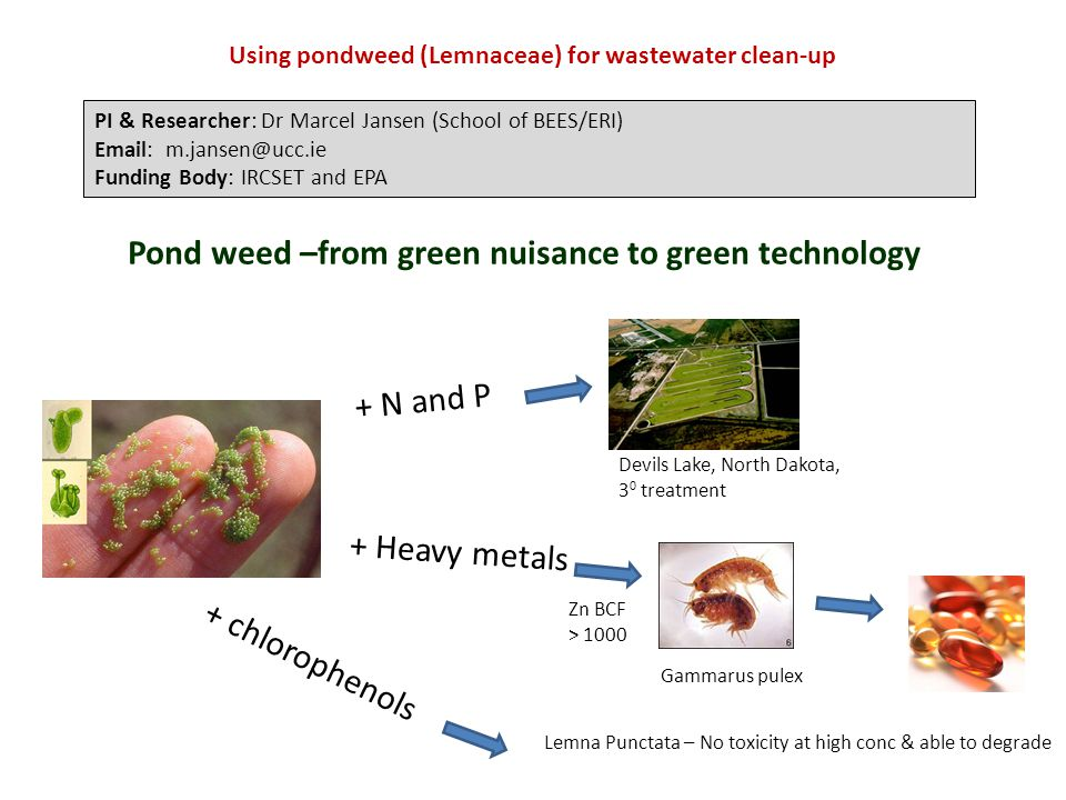 Pond weed –from green nuisance to green technology