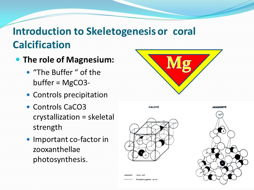 Introduction to Skeletogenesis or coral Calcification