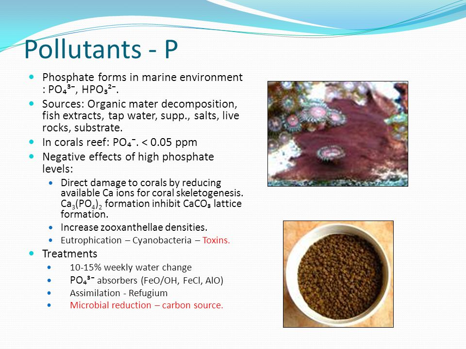Pollutants - P Phosphate forms in marine environment : PO₄³⁻, HPO₃²⁻.