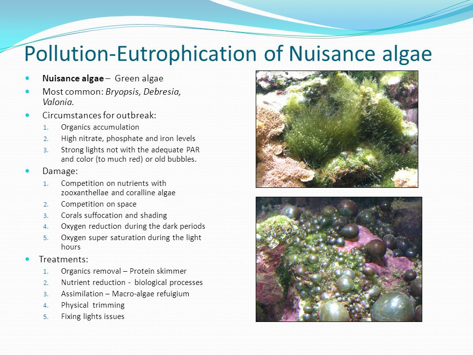 Pollution-Eutrophication of Nuisance algae