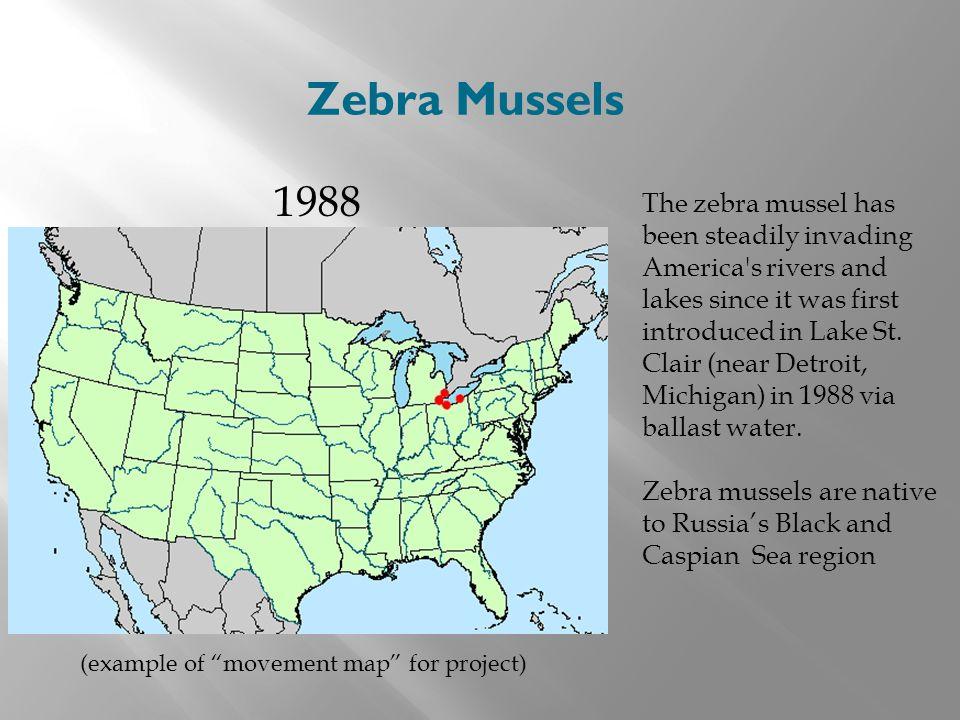 Zebra Mussels 1988.