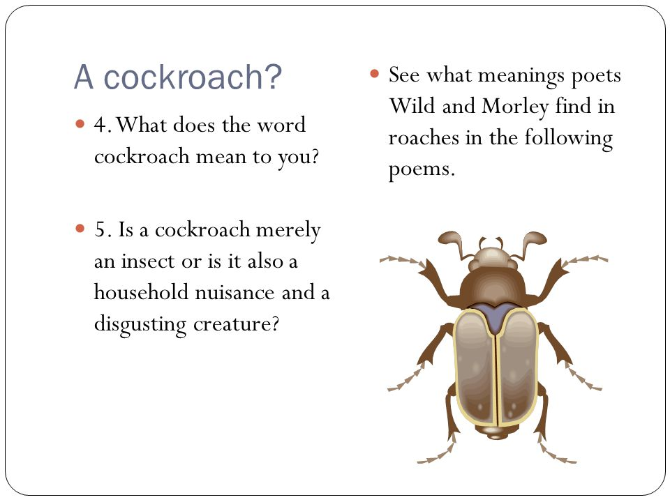 A cockroach See what meanings poets Wild and Morley find in roaches in the following poems. 4. What does the word cockroach mean to you