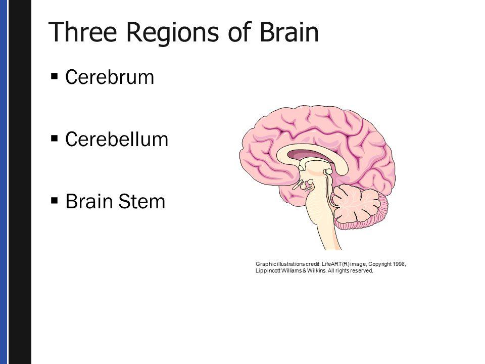 Three Regions of Brain Cerebrum Cerebellum Brain Stem