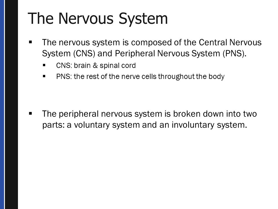 The Nervous System The nervous system is composed of the Central Nervous System (CNS) and Peripheral Nervous System (PNS).