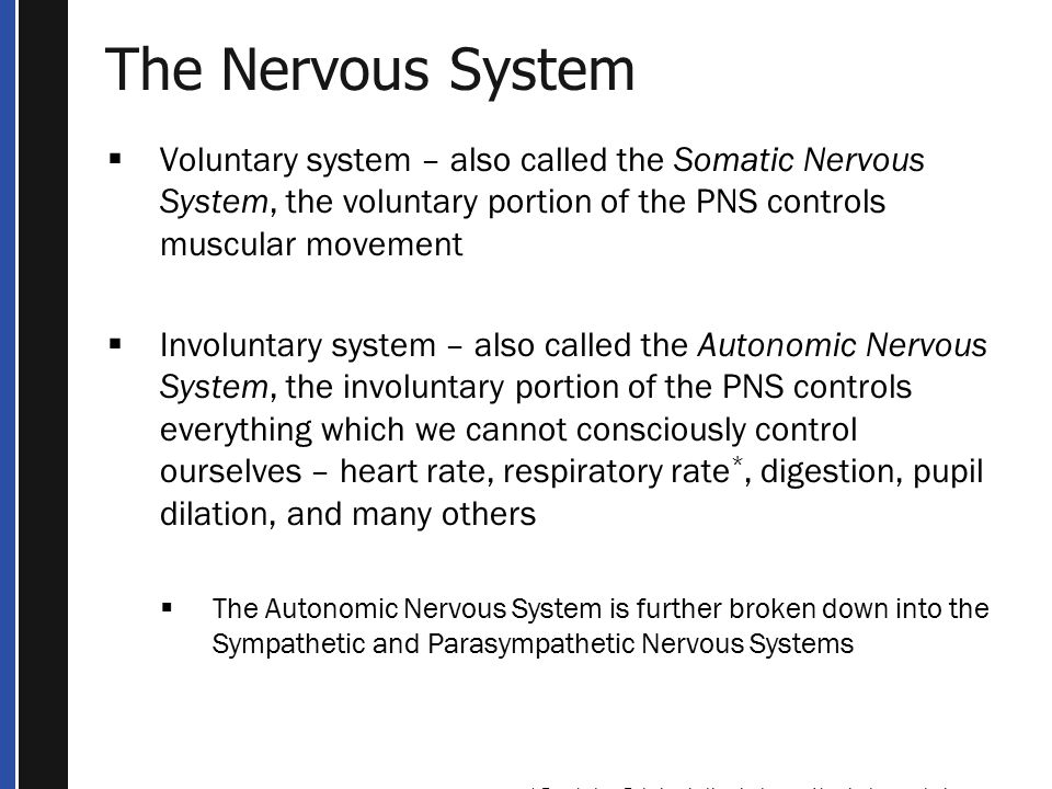 The Nervous System Voluntary system – also called the Somatic Nervous System, the voluntary portion of the PNS controls muscular movement.