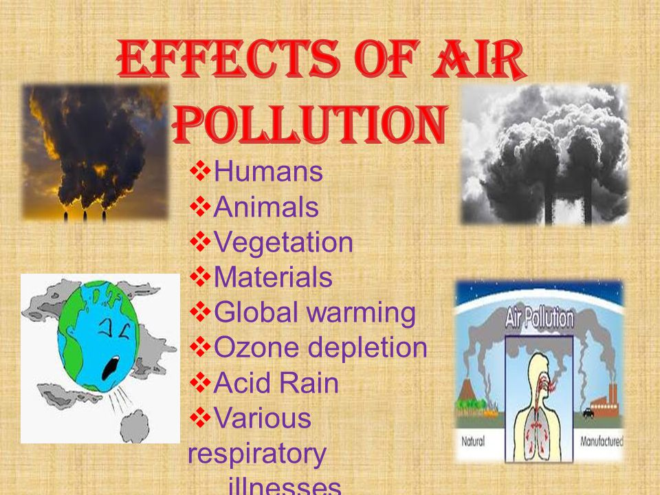 EFFECTS OF AIR POLLUTION Humans Animals Vegetation Materials
