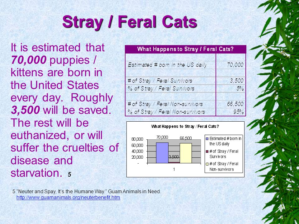 Stray / Feral Cats