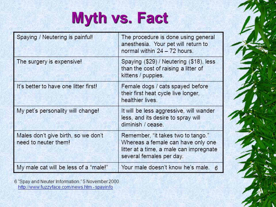 Myth vs. Fact Spaying / Neutering is painful!