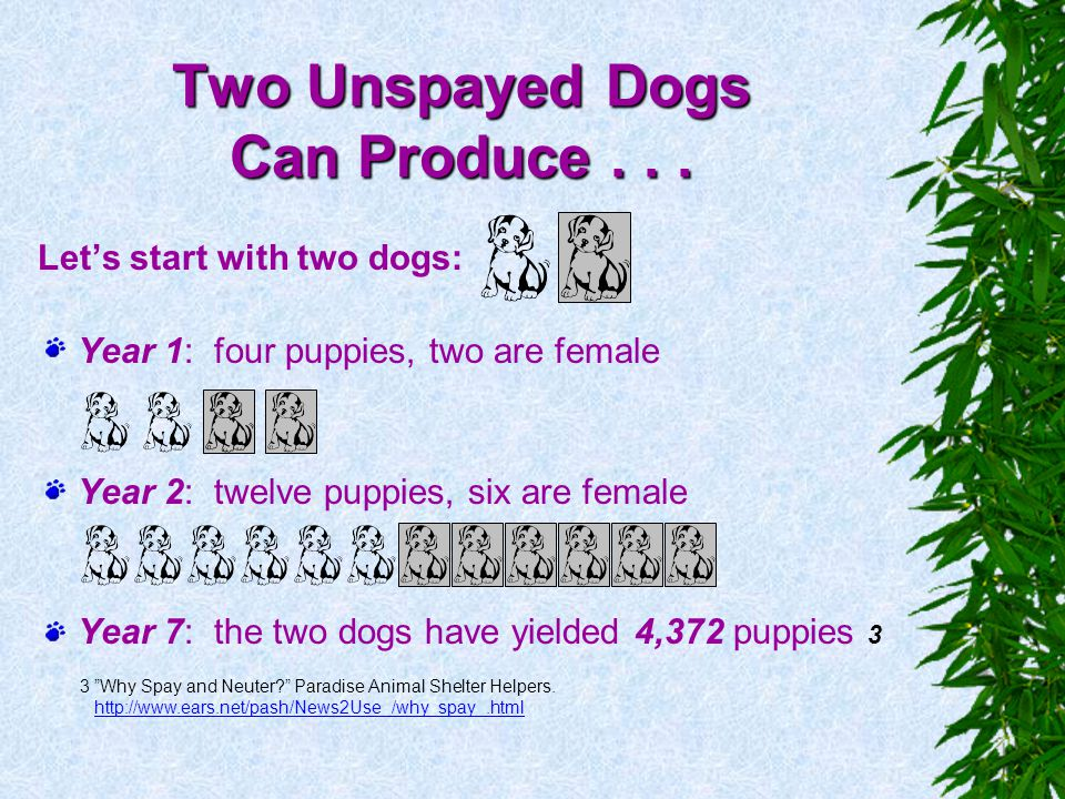 Two Unspayed Dogs Can Produce . . .