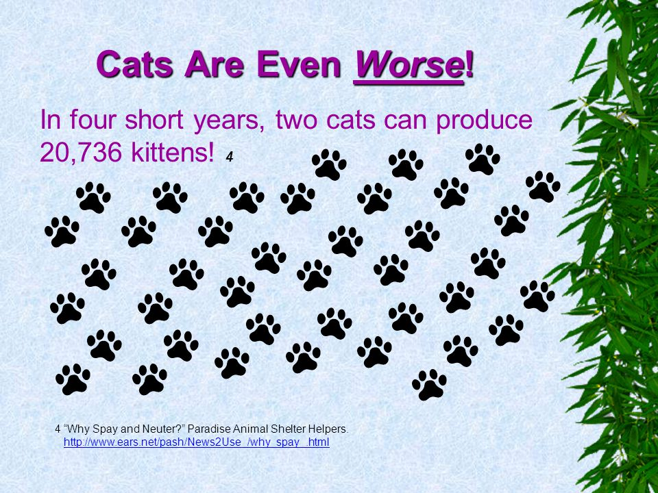 Cats Are Even Worse! In four short years, two cats can produce 20,736 kittens! 4. 4 Why Spay and Neuter Paradise Animal Shelter Helpers.