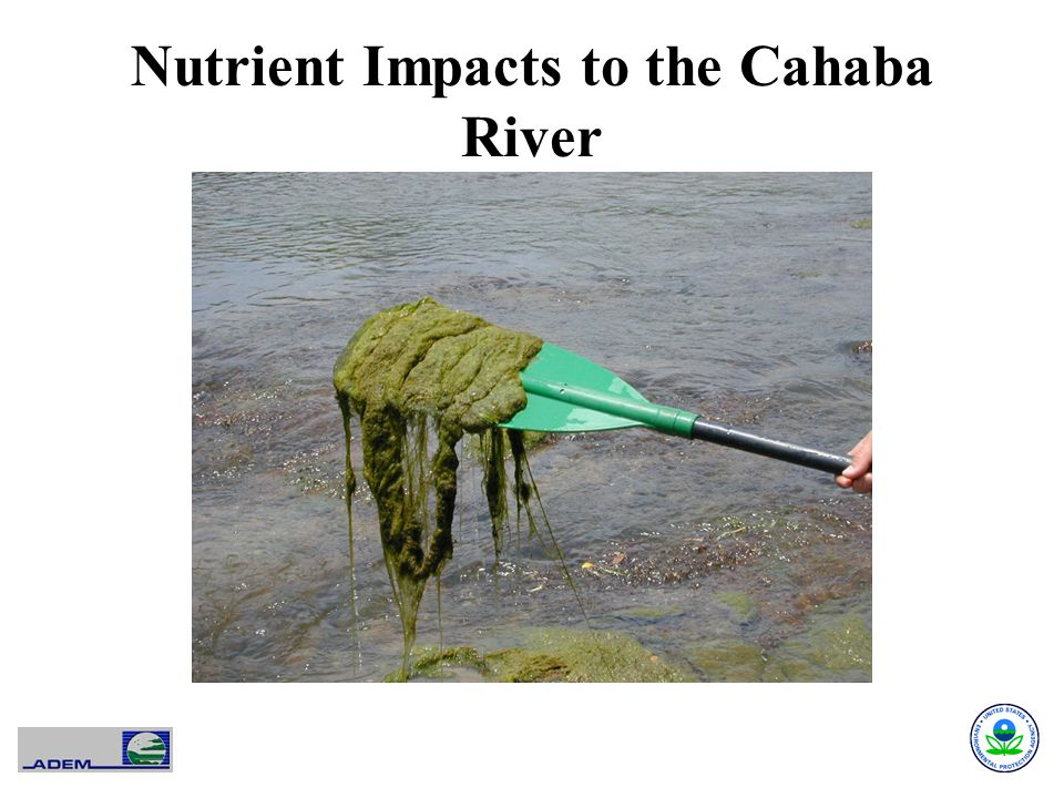 Nutrient Impacts to the Cahaba River